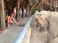 Moi qui nourrit le mastodonte. Vue de profil.