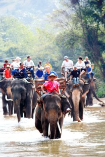 Thai-Elephant-Tour