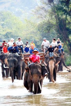 Thai-Elephant-Tour